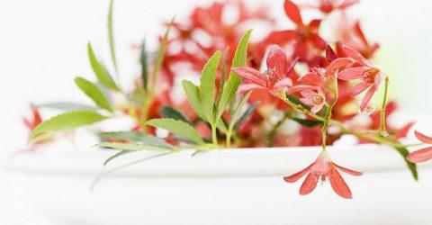 Aşkın sembolü çiçekler